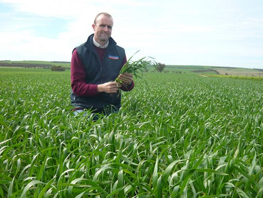 Wheat variety revealed for QLD growers