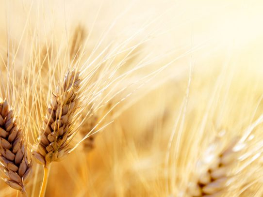 Innovation in agriculture the focus for major grains industry event