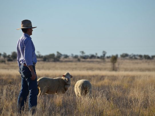 No risks approach to sheep measles