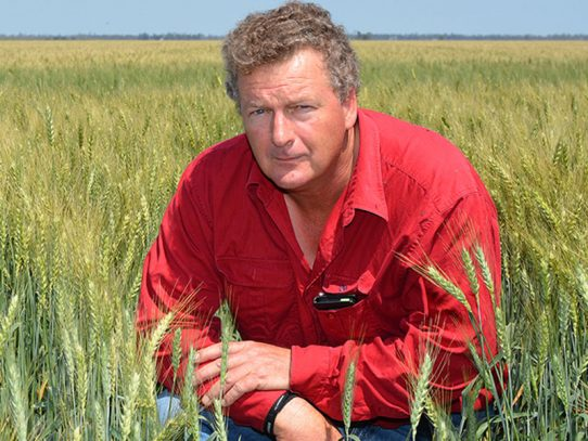 Downs grower puts new APH wheat to test