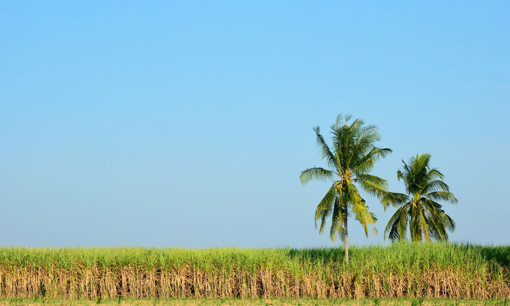 Grant supports sugarcane waste research for Burdekin biorefinery