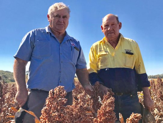 Kingaroy family mark quarter-century as farming trial co-operators