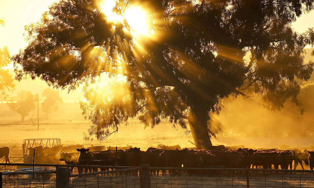 Federal Government drought support boost welcomed