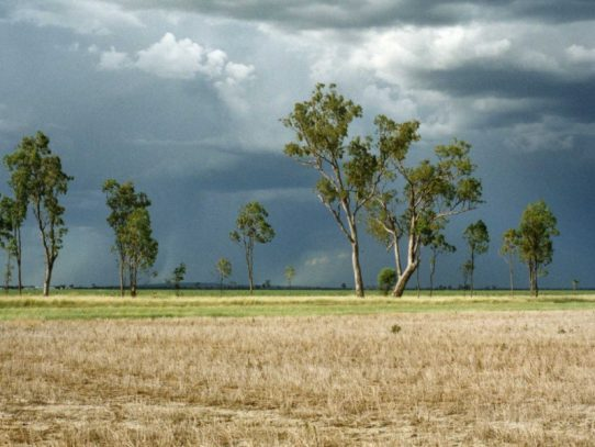 Spray weeds early to save moisture and money