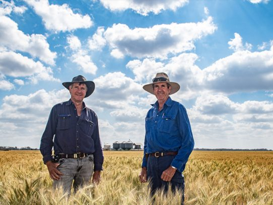 Reliant wheat pulls through tough season at Brigalow