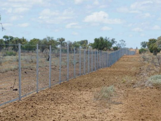 Fencing funding for invasive pest species