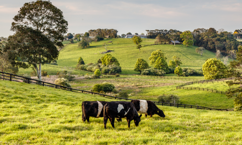 COVID-19 compounds dairy woes