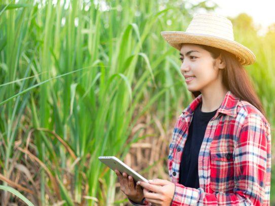 Capability development to encourage the next generation of sugarcane scientists